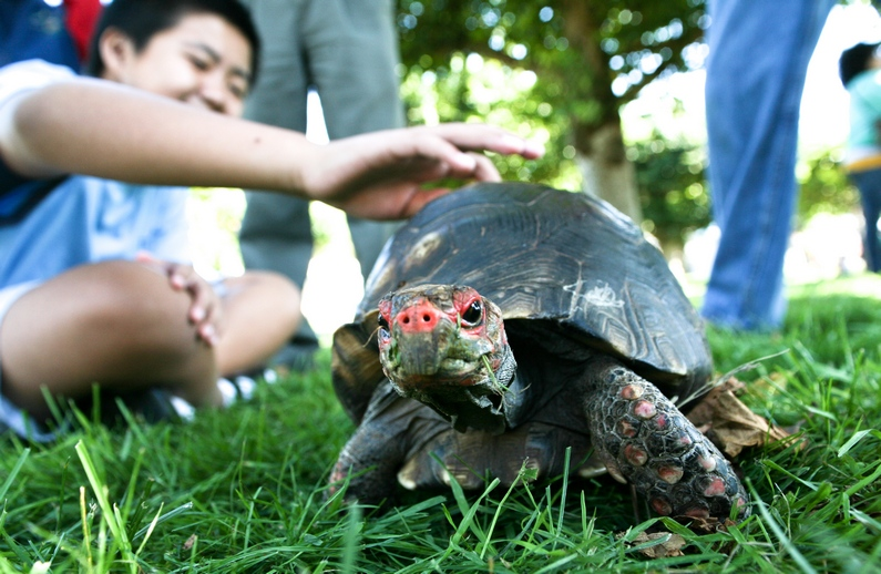 Children got to play with a tortoise and other animals out on the Music Concourse
