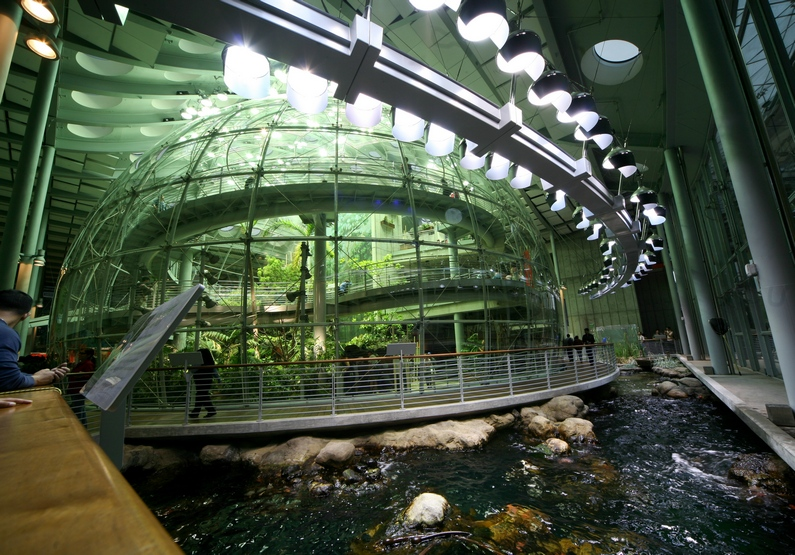 The Indoor Rainforest